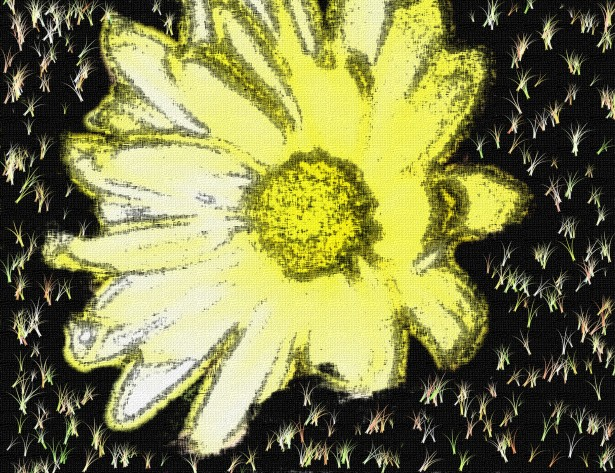 daisy-background-flower-canvas.jpg